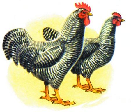 Беларусь ввела запрет на ввоз живой птицы и продуктов ее переработки из Германии (Браденбург) и итальянского региона Пьемонте