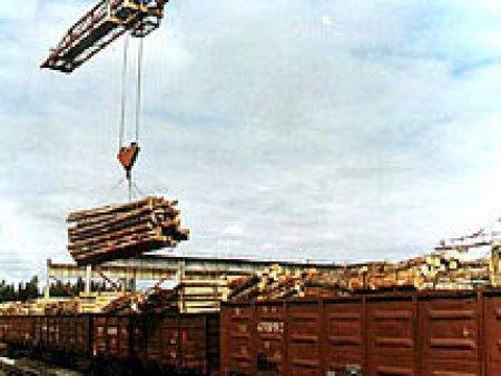 Экспорт круглого леса может прекратиться из-за введения 80% таможенной пошлины