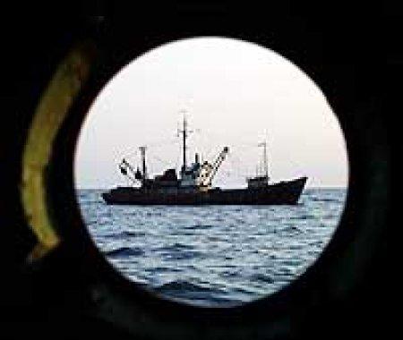 Мурманские таможенники арестовали три маломерных судна за контрабанду рыбы на сумму более 10,5 миллионов рублей
