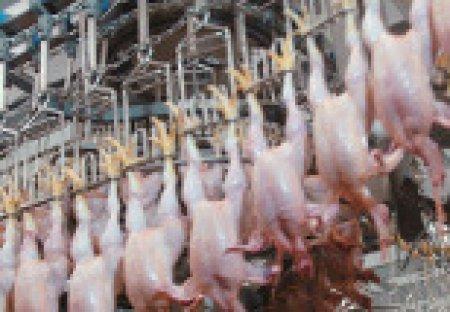 С января правительство РФ повышает пошлины на ввоз свинины и курятины
